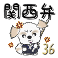 Shih Tzu Dog 36