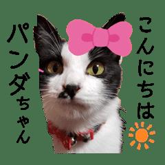 うちのパンダちゃん♀『猫の日常』