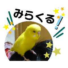 lemon pudding_20200205214803