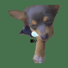 犬のライちゃん