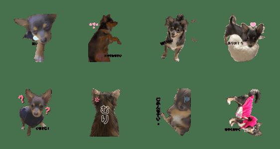 「犬のライちゃん」のLINEスタンプ一覧
