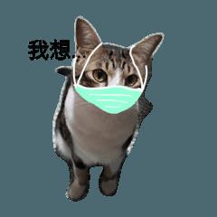 meow meow...mask