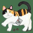 Calico cat's Diary