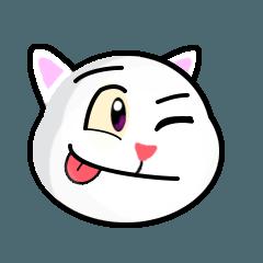 Yuki The White Cat