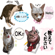 Sticker to protect cats!1