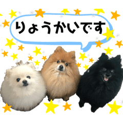 小林さんちの犬2