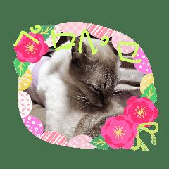 可愛い!猫のスタンプ