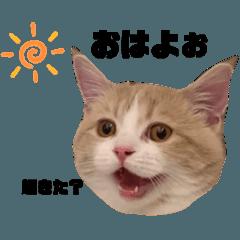kosukemaeda0103_20200209154422