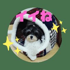 MIX犬ララさんの日常②