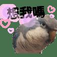 Bird Dudu2