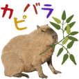 Daily life of the capybara