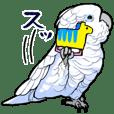 Mischievous White parrot 4