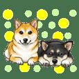 小型犬&中型犬、大集合!