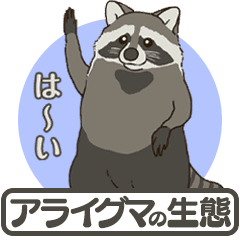 Raccoon ecology