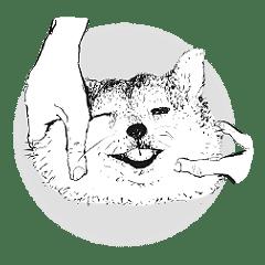Monday the Shiba Inu