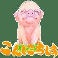 筆と色鉛筆の豚
