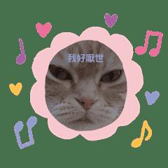 cute__cat