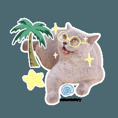 Cia Cat Diary Sticker