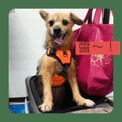 Ka Chiang doggie daily life