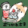 Shiba Inu Dog & Friends