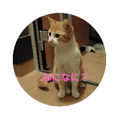 猫ときどき蜂