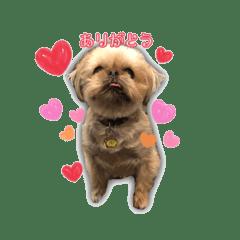 ブリュッセルグリフォン犬のハナ&フレンズ