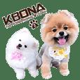 KBONA - The Pomeranian's Diary II