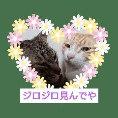 愛でられし猫
