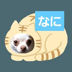 rinrin_20200214195811