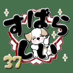 【大きな文字】シーズー犬 37