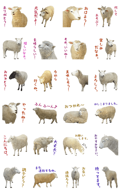 Everyday life of the sheep