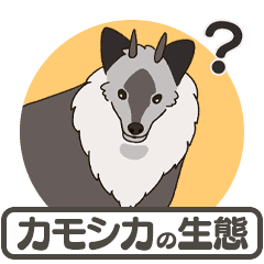 Japanese serow ecology