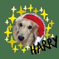 Harry Baby_20200216171402