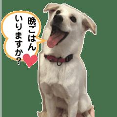 保護犬のスタンプ