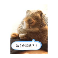 愛翹班的兔子