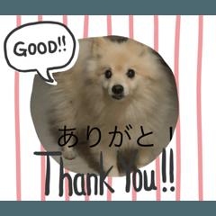 Taishi!