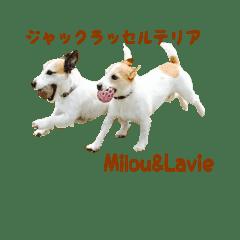 JRT Milou & Lavie