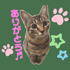 ひめちゃん (猫・キジトラ)