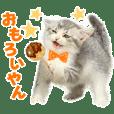 Manzai cat 2