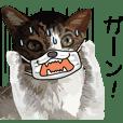 メガネ&マスク猫