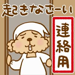 トイプーのぷう太郎 連絡用