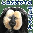 シロガオサキのモップくん JMC 3