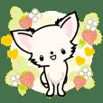 Kawaii Chihuahua 3 (English)