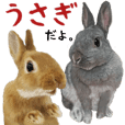 Work of the friends of the rabbit