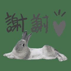 Yoyo兔子貼圖