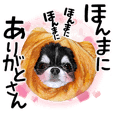 "AZUKI the Chihuahua ""Surreal headgears"""