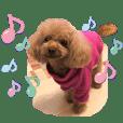 可爱的狗移动玩具贵宾犬