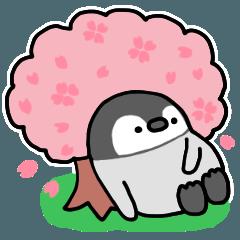春を楽しむコタロー