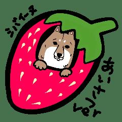 シュールな柴犬(シバイーヌ) 普段使い