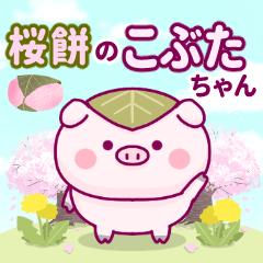 Kobuta-chan of Sakuramochi